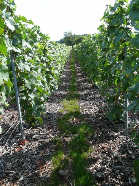 Route vignes